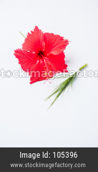 hibiscus flower or jasvand phool and durva or durva