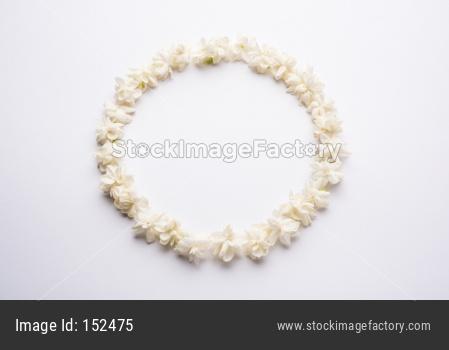 Mogra or Jasminum sambac Flower
