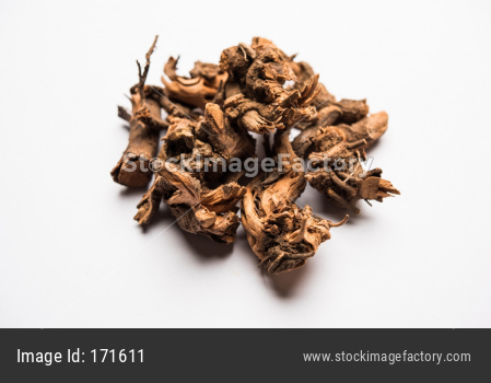 Ayurvedic Chitrak powder or Sheetraj roots also known as Plumbago zeylanica